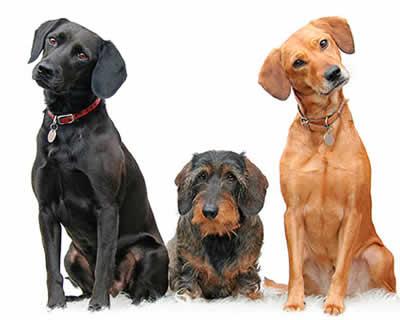 Pet Insurance Spain